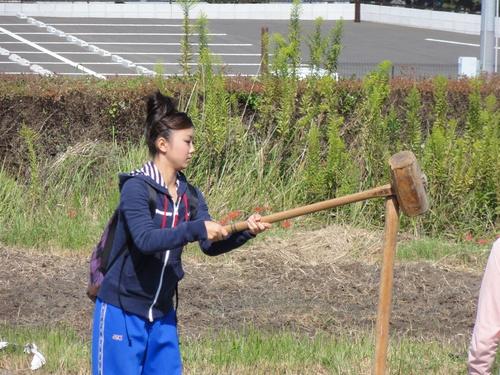 H12年10月 岬高校「山海人プロジェクト:菜の花畑」_c0108460_16412833.jpg