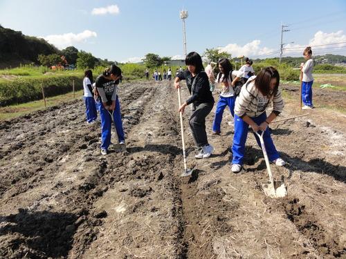 H12年10月 岬高校「山海人プロジェクト:菜の花畑」_c0108460_16434318.jpg