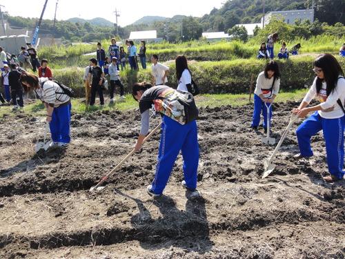 H12年10月 岬高校「山海人プロジェクト:菜の花畑」_c0108460_1653867.jpg