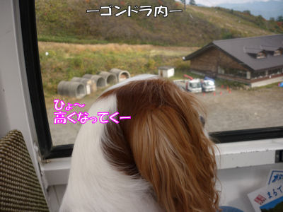 b0185323_17543511.jpg
