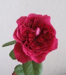 花の力!_c0165824_2243669.jpg