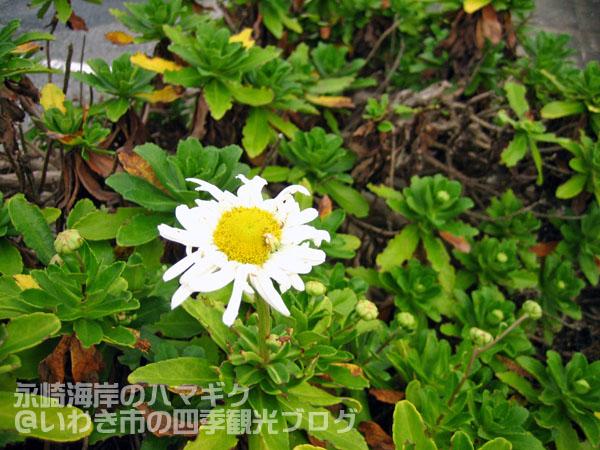 f0105342_14503136.jpg