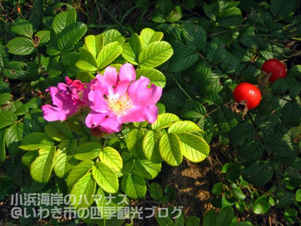 f0105342_15272156.jpg