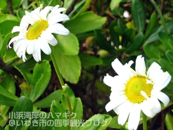 f0105342_157889.jpg
