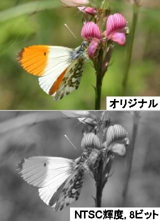 c0226551_1913017.jpg