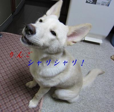 f0046854_16263833.jpg