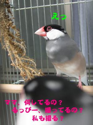 b0158061_19551657.jpg