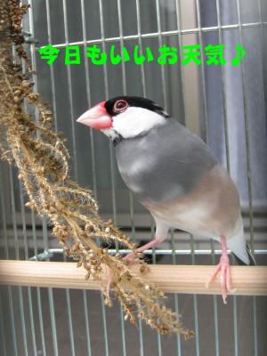b0158061_1955438.jpg