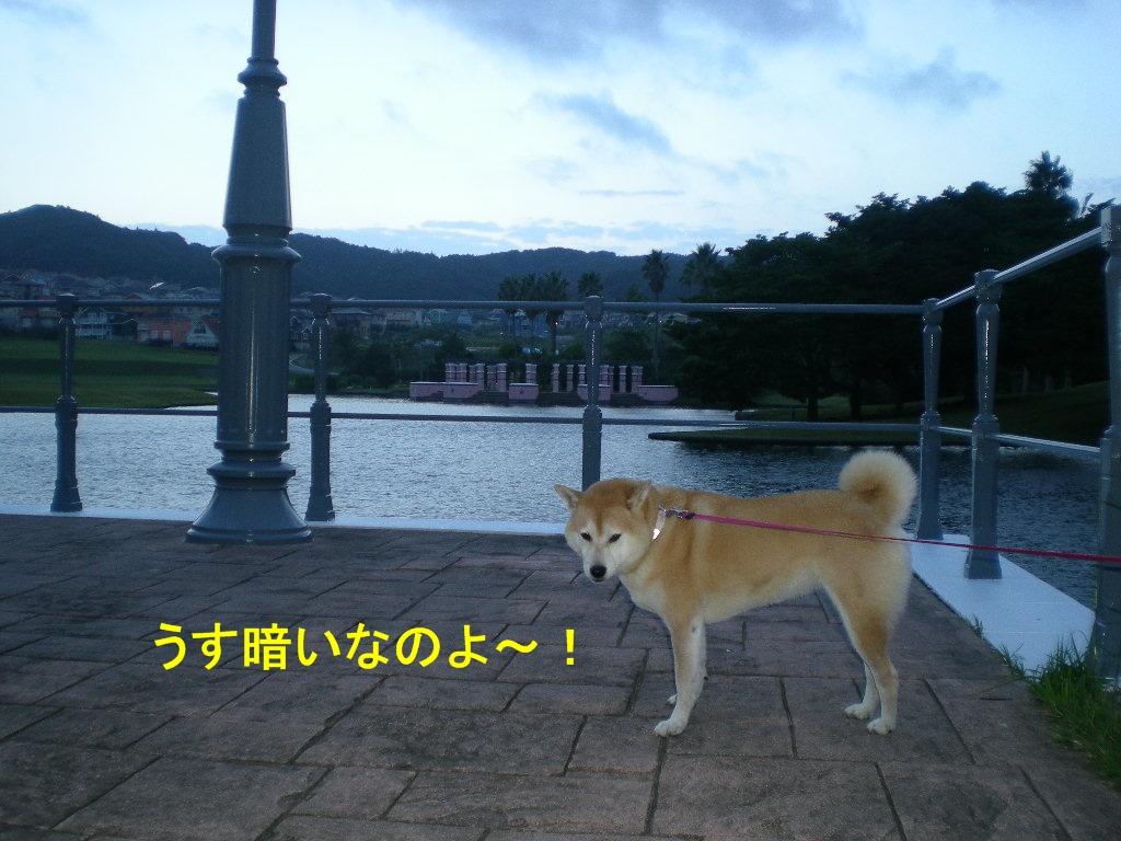 2010年10月7日(木)秋なすとバラ!_f0060461_927542.jpg