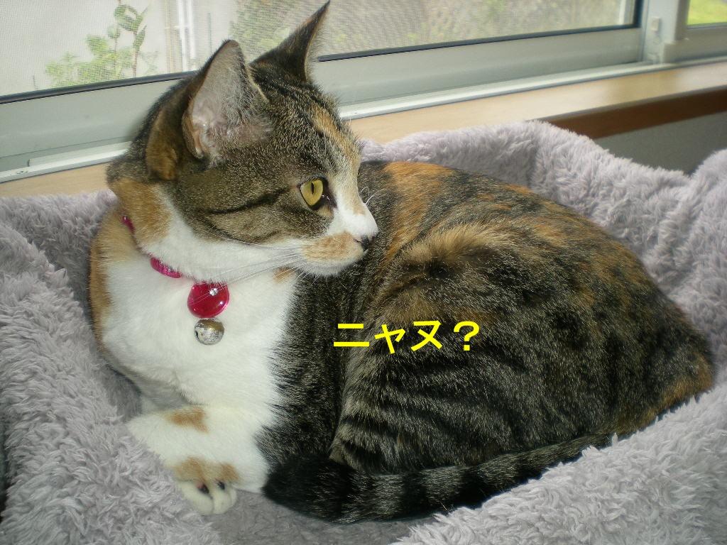 2010年10月7日(木)秋なすとバラ!_f0060461_929343.jpg