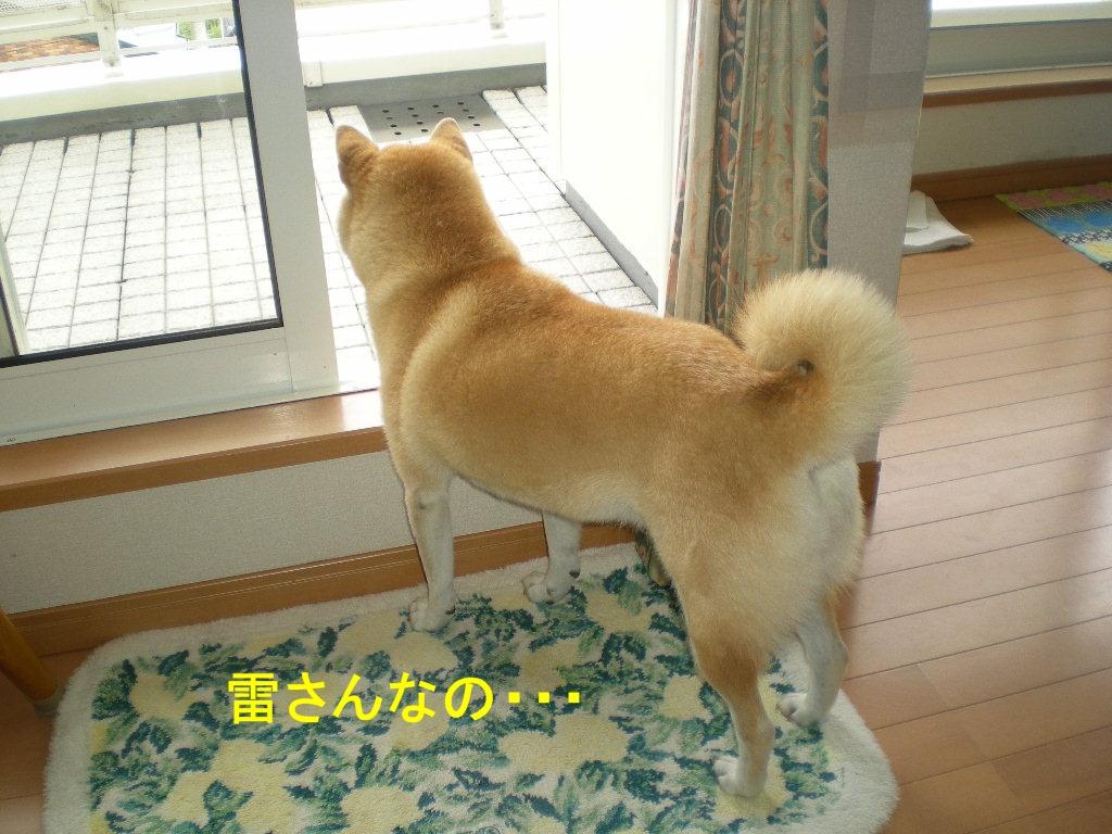 2010年10月7日(木)秋なすとバラ!_f0060461_9302791.jpg
