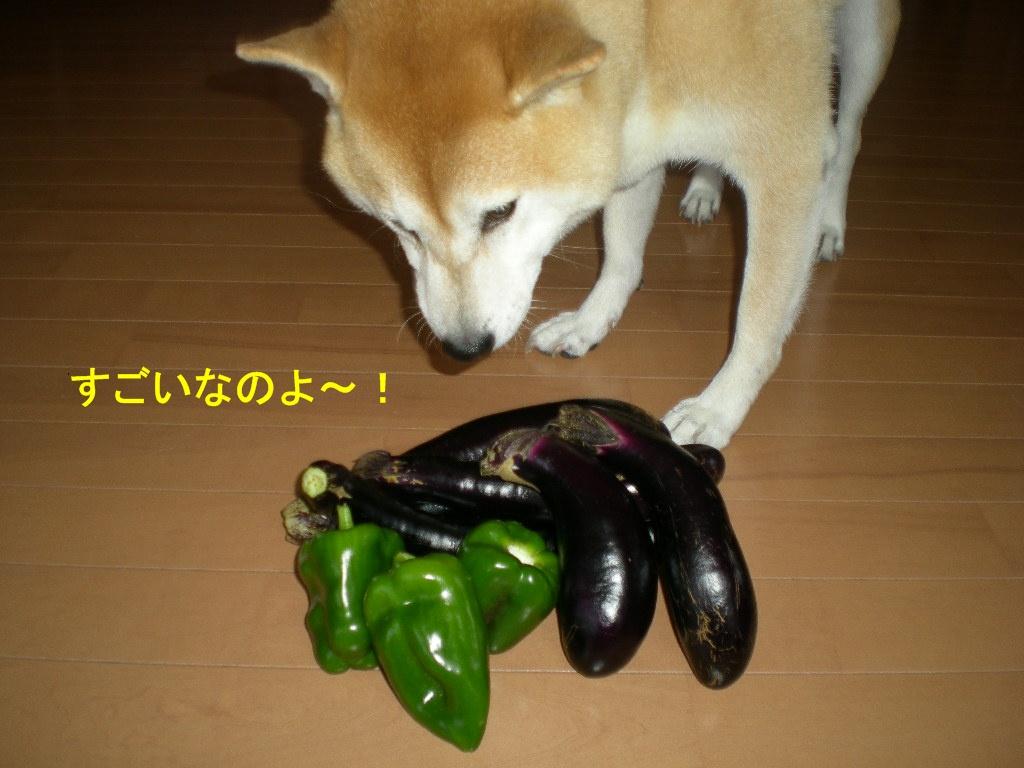 2010年10月7日(木)秋なすとバラ!_f0060461_933387.jpg