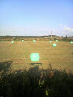 今年度の牧草収穫終了_e0063268_1681139.jpg