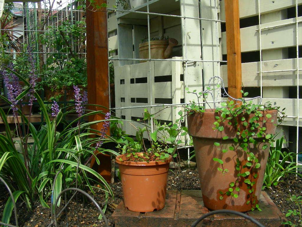 楽しい庭遊び~♪_b0096584_183535100.jpg