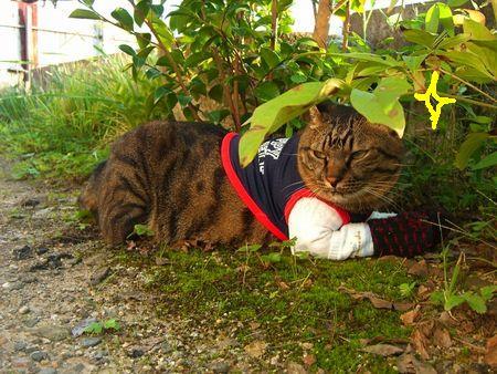 ~台湾版~ 我的猫小太_a0099131_1681338.jpg