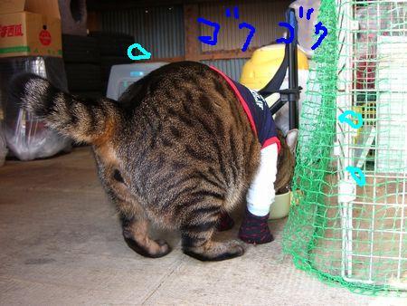 ~台湾版~ 我的猫小太_a0099131_1682273.jpg