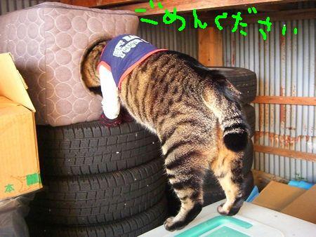 ~台湾版~ 我的猫小太_a0099131_1683134.jpg