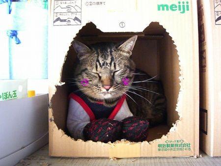 ~台湾版~ 我的猫小太_a0099131_1684062.jpg