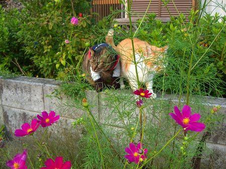 ~台湾版~ 我的猫小太_a0099131_168505.jpg