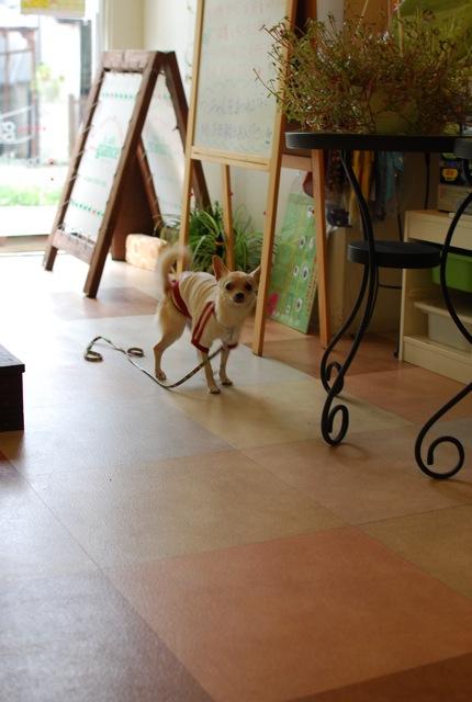 子犬のクラス 全6回_c0099133_927031.jpg