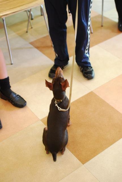 子犬のクラス 全6回_c0099133_9271751.jpg