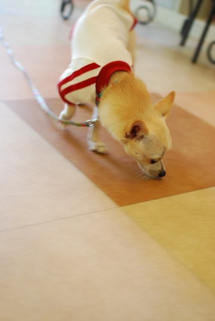 子犬のクラス 全6回_c0099133_927871.jpg