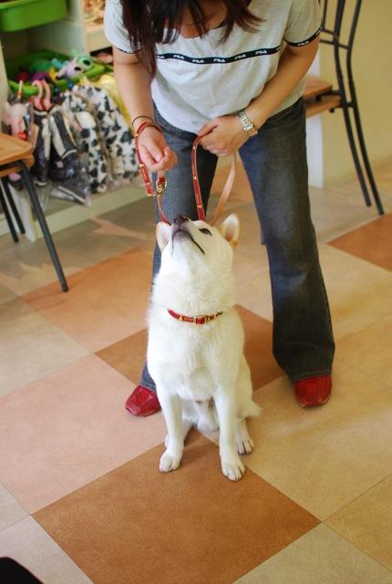 子犬のクラス 全6回_c0099133_928846.jpg