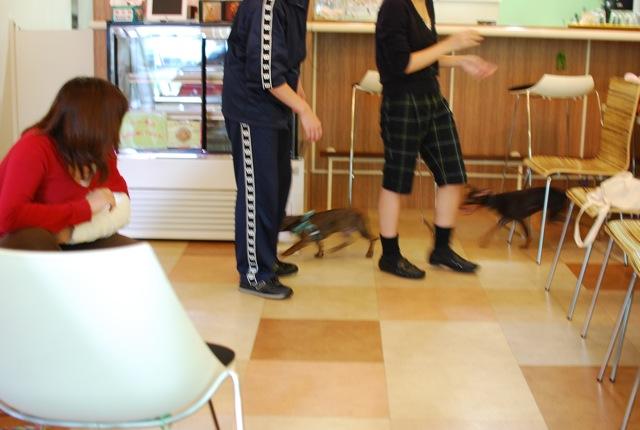 子犬のクラス 全6回_c0099133_9354372.jpg