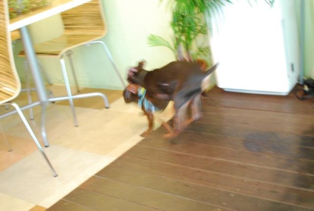子犬のクラス 全6回_c0099133_9365721.jpg