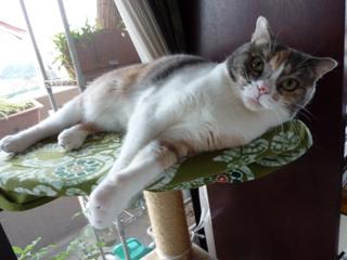 猫のお友だち マミちゃん編。_a0143140_22321966.jpg