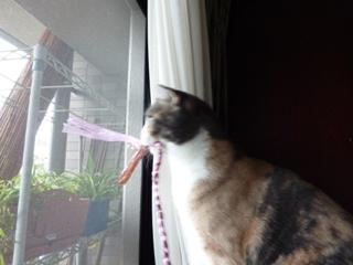 猫のお友だち マミちゃん編。_a0143140_22325679.jpg