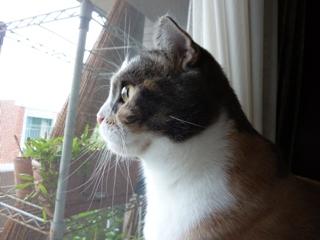猫のお友だち マミちゃん編。_a0143140_22335984.jpg