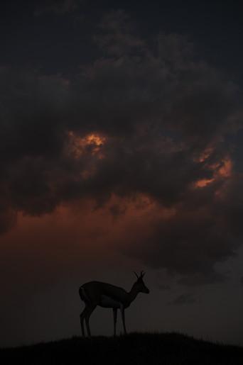 ここ毎日空の表情が豊かです。_e0066474_203193.jpg