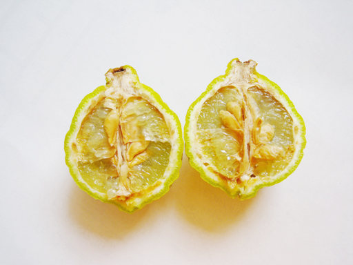 コブミカンの果実, Kaffir lime (Citrus hystrix) fruit