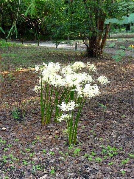 植物園の秋の花2_e0048413_17493665.jpg