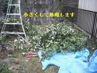 f0031037_20161275.jpg