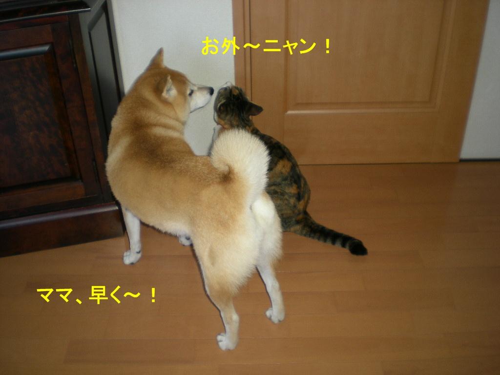 2010年10月9日(土)秋深し!_f0060461_1110982.jpg