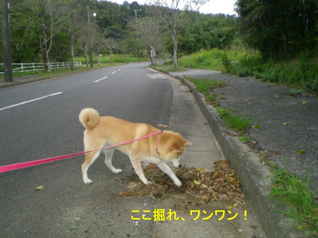 2010年10月9日(土)秋深し!_f0060461_11231377.jpg