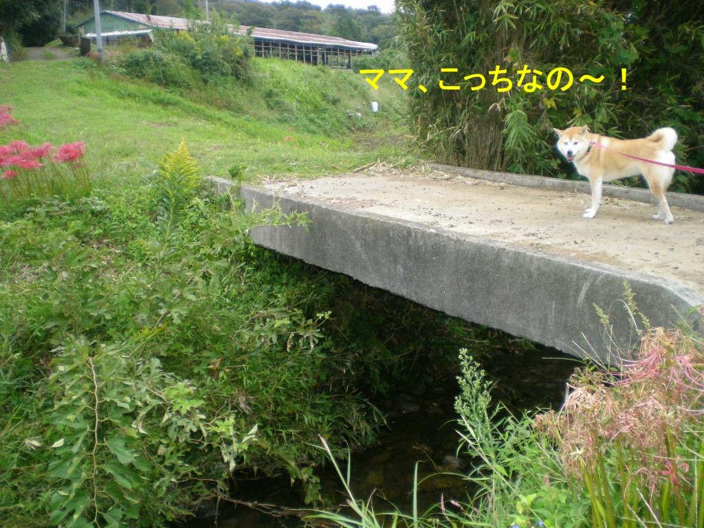 2010年10月9日(土)秋深し!_f0060461_11303145.jpg