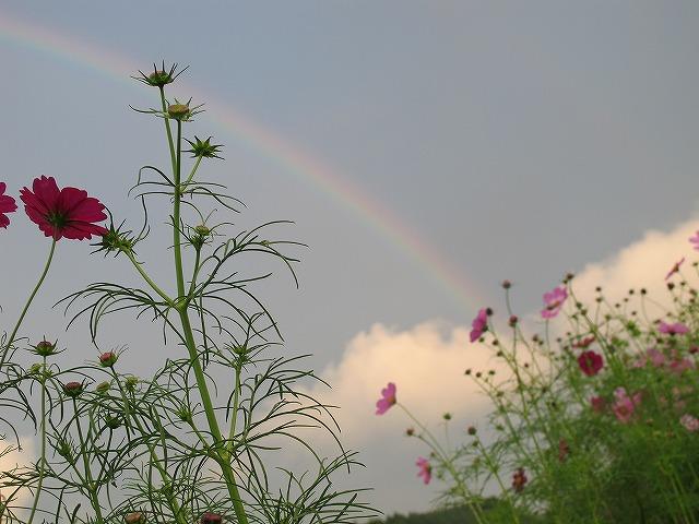 虹!_e0145693_2102817.jpg