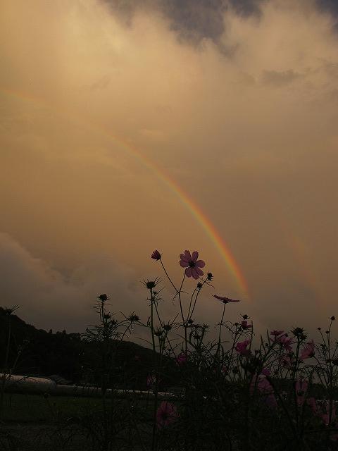 虹!_e0145693_218976.jpg