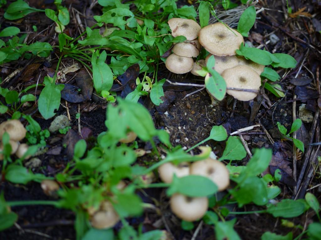 庭にボリボリ_f0138096_11281575.jpg