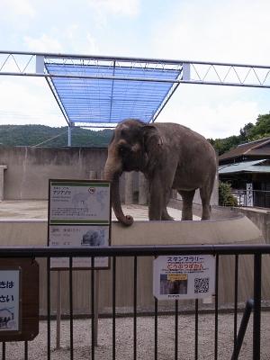大正12年ゾウ舎のレリーフをあおいで~大人のための京都市動物園案内_c0069903_10581510.jpg