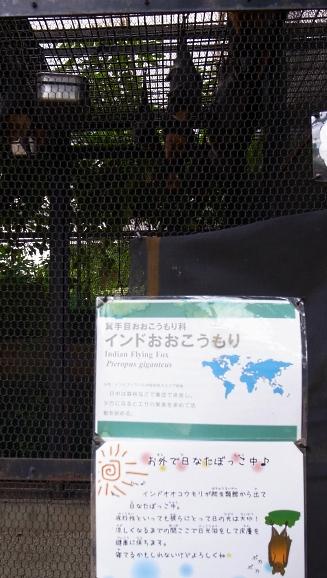 大正12年ゾウ舎のレリーフをあおいで~大人のための京都市動物園案内_c0069903_1152684.jpg