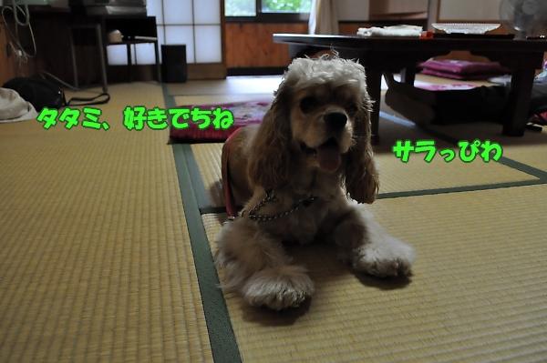 b0067012_2582077.jpg