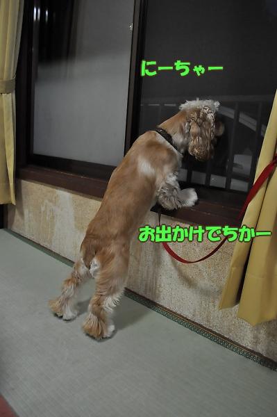 b0067012_413529.jpg