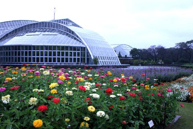 植物園の花3_e0048413_17304060.jpg