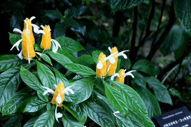 植物園の花3_e0048413_17305370.jpg