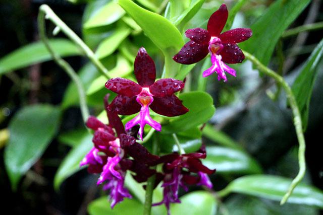 植物園の花3_e0048413_17314397.jpg