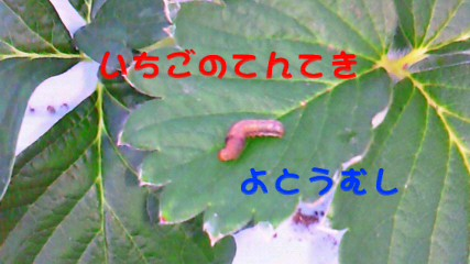 a0169558_19405042.jpg